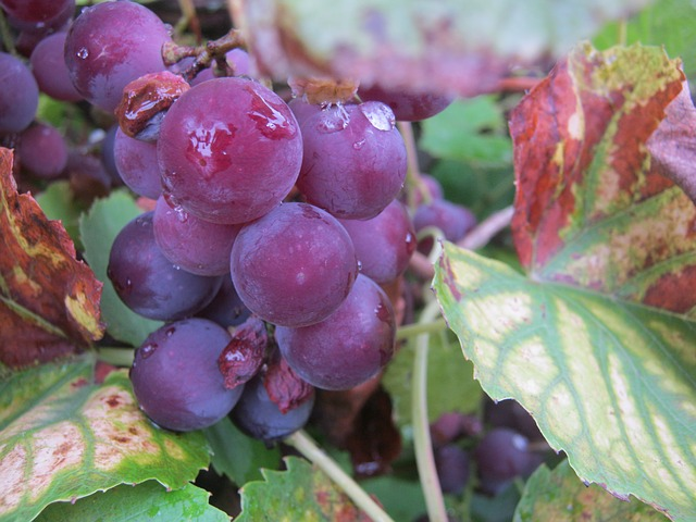 Best Red Wine Brands 2015 3