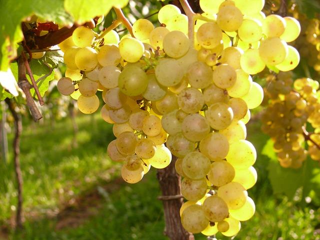 Best White Wine Brands 2015 2